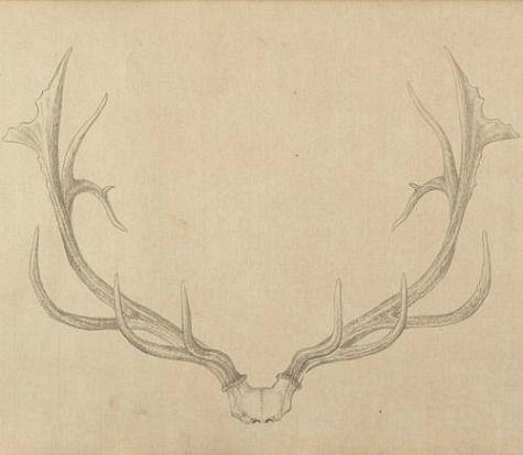 Drawn antler Antlers Antler 67) ideas of