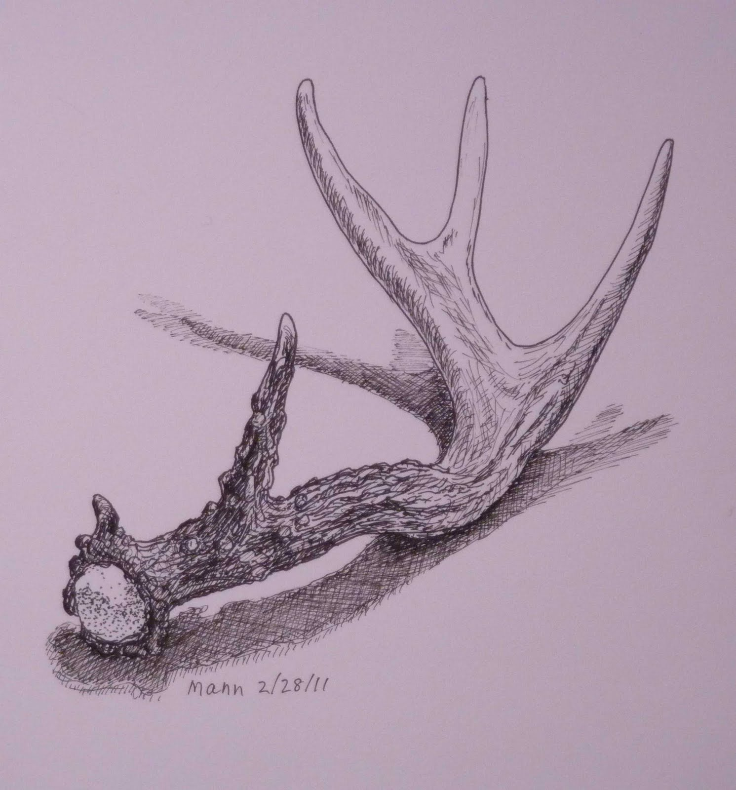 Drawn antler A pencil antler line drawing