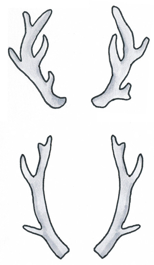 Drawn antler To 4 Antler Steps antler_doodle_bainbridge