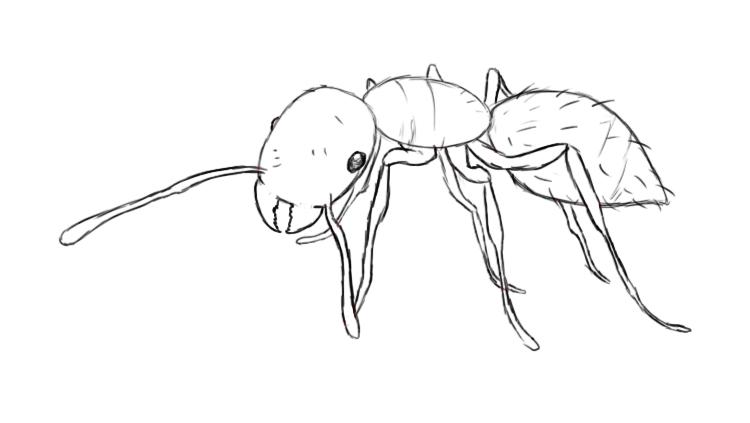 Drawn ants #13