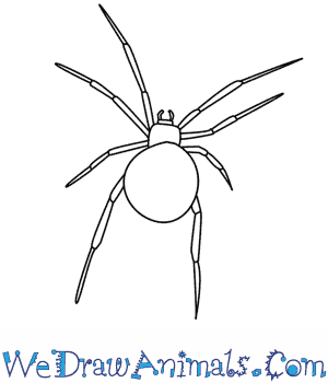 Drawn spider silhouette  Spider A Draw How