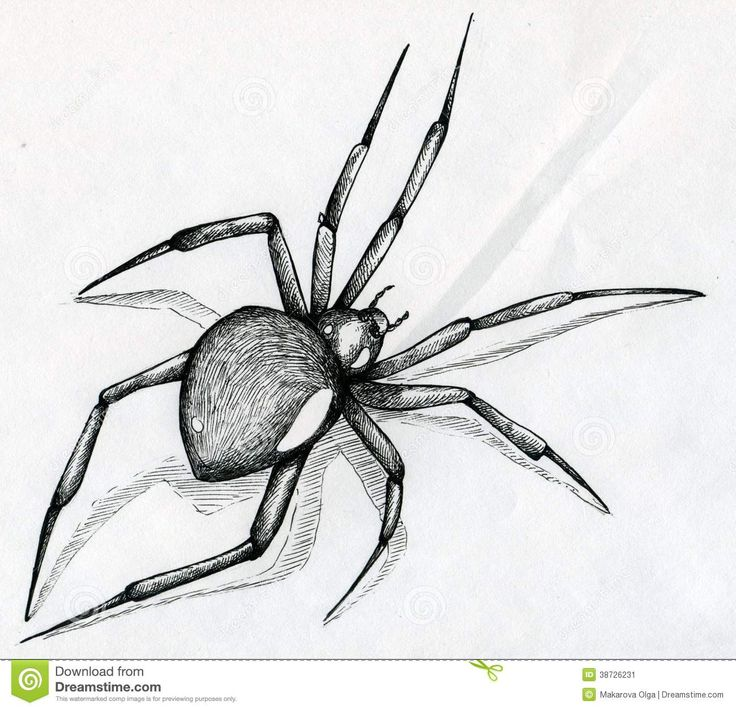 Drawn spider web graphic Black Spider on tattoo Image: