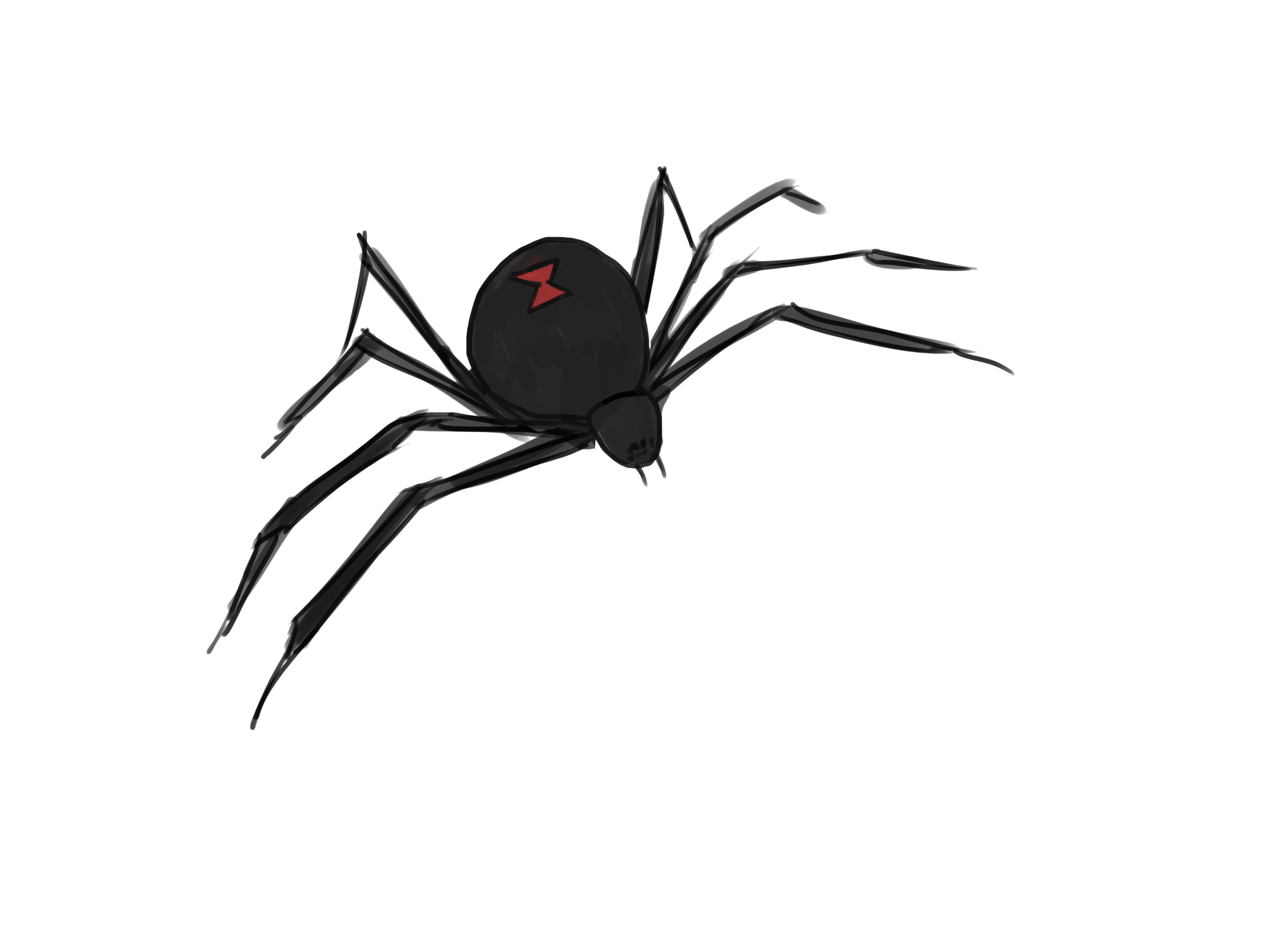 Drawn spider web cartoon Ways to wikiHow a Spider