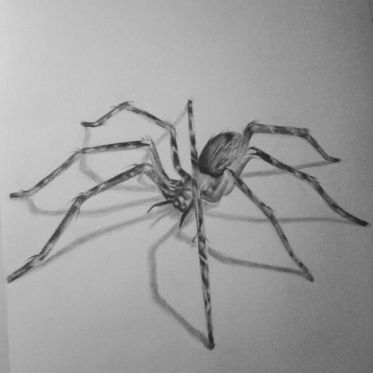 Drawn pencil spider Spider · conpleted Spider #art