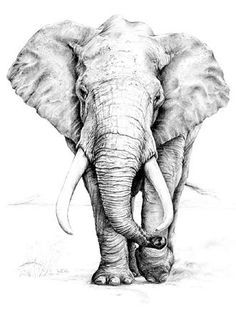 Drawn asian elephant Google Pinterest head Best tattoo