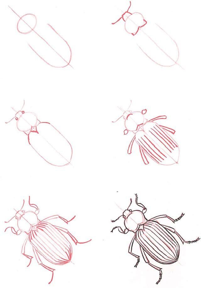 Drawn bugs animal Theme best have showing could