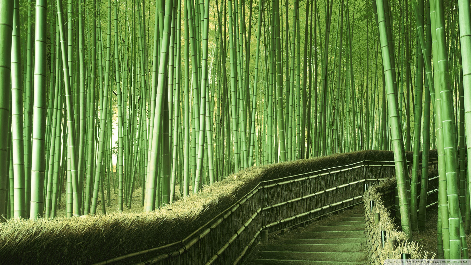 Drawn background bamboo #1