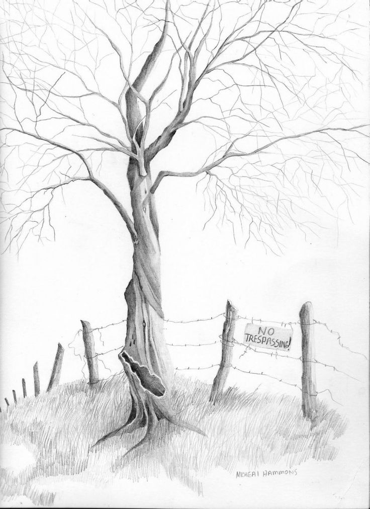 Drawn background drawing nature To images best pencil trees