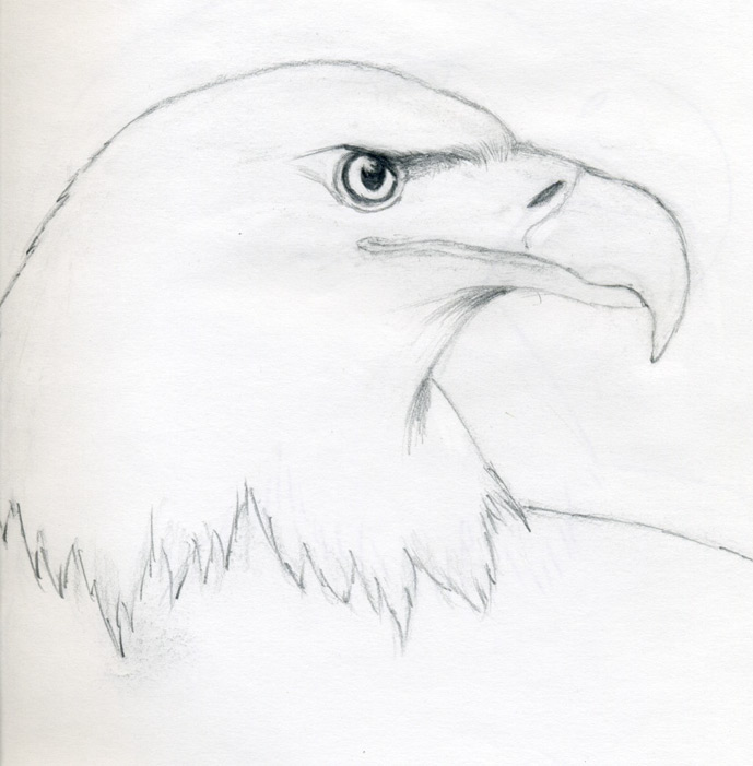 Drawn bald eagle #8