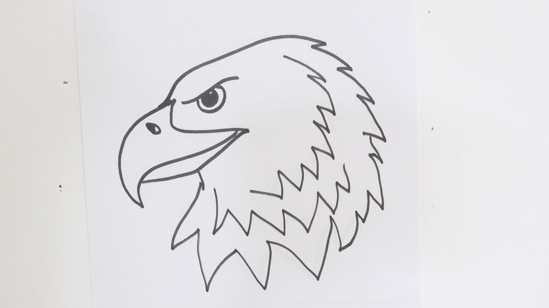 Drawn bald eagle #15