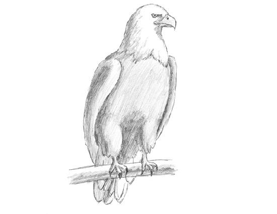 Drawn hawk standing eagle Drawing Draw video tutorial Draw