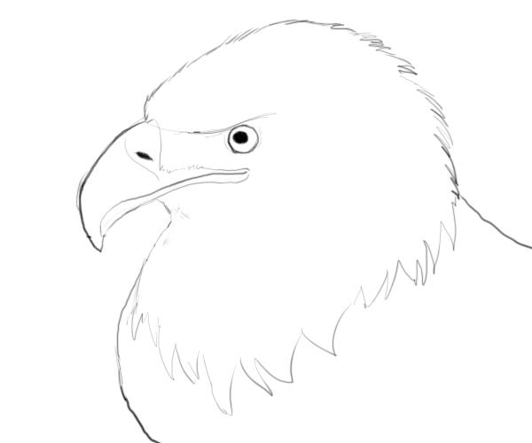 Drawn bald eagle #1