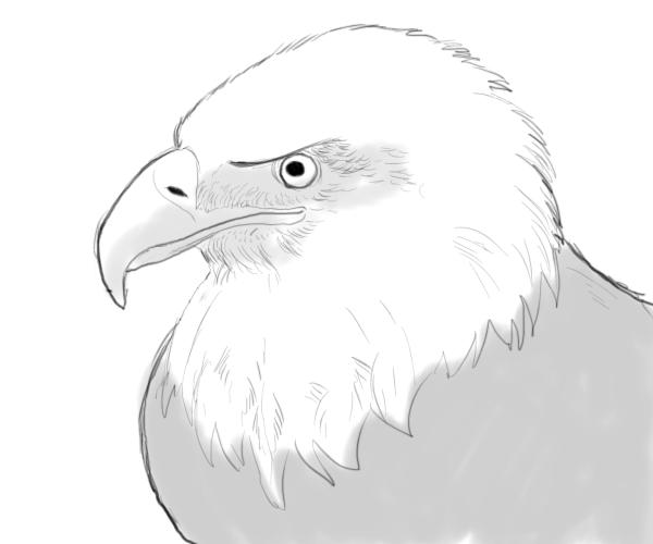 Drawn bald eagle #2