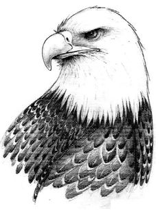 Drawn bald eagle #6