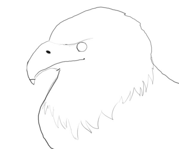 Drawn bald eagle #4