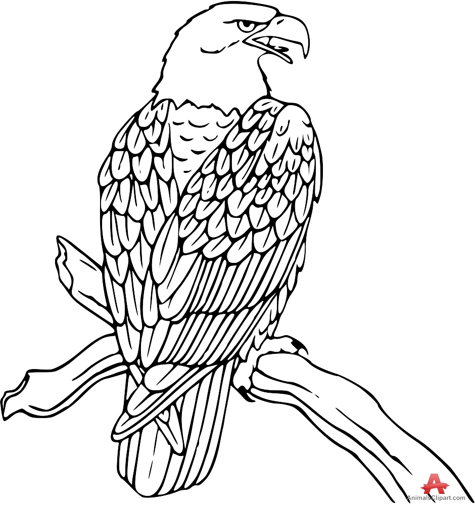 Bald Eagle clipart black and white Tree Clipart Tree Outline on