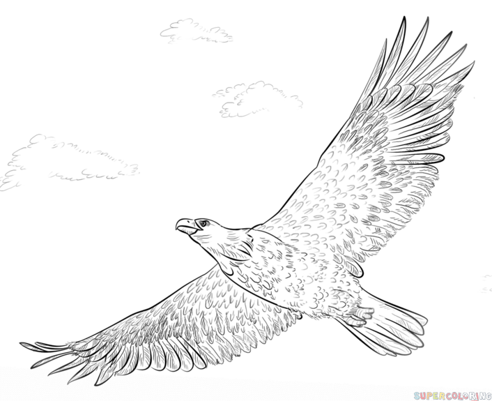 Drawn hawk standing eagle Bald Eagle draw a How