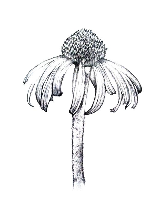 Drawn ballerina derwent inktense On drawn and or