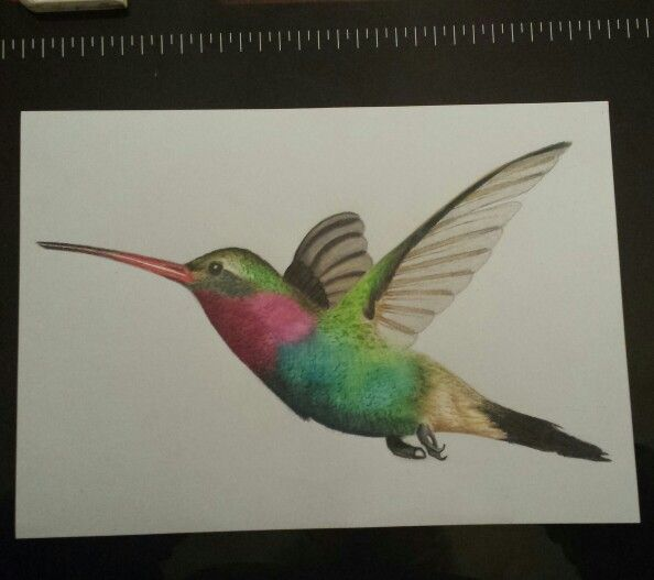 Drawn planks red Hummingbird 51 Pinterest Inktense Derwent
