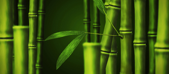 Drawn bamboo Draw Painting Drawing Photoshop a