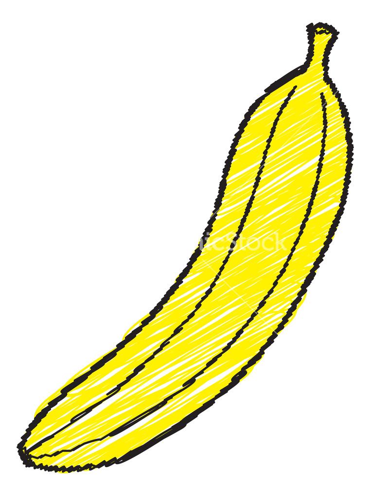 Drawn banana Vector Banana Stock Banana Drawing