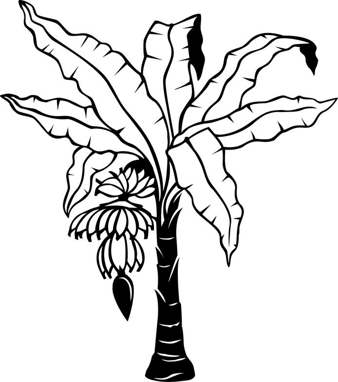 Amd clipart banana Clip Clipart Tree on Drawing