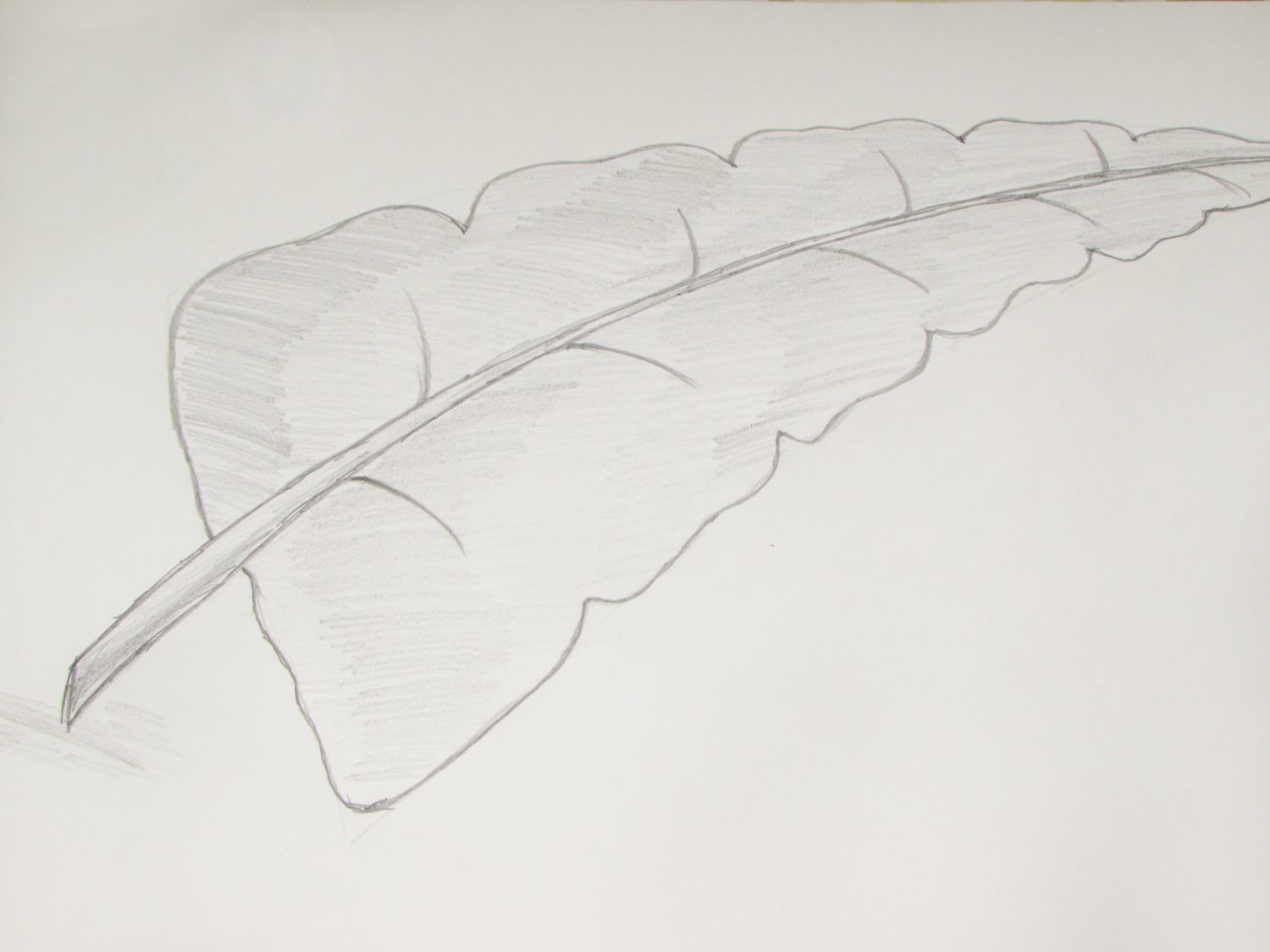 Drawn leaf Sketch Sketch or Using of