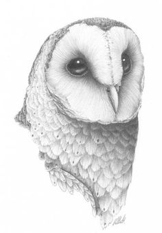 Brown Hawk Owl clipart pencil drawing Drawing Sketch this Find Art