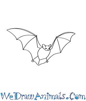 Drawn bat Little to Draw How Bat