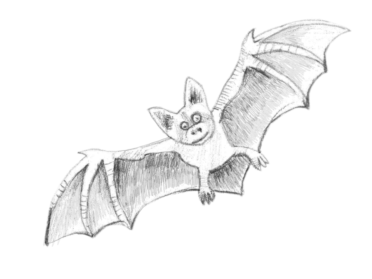 Drawn bat Bat To Draw How by