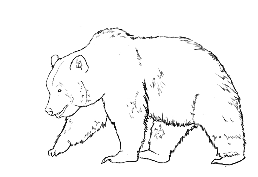 Drawn polar  bear tiny To Central Draw  A