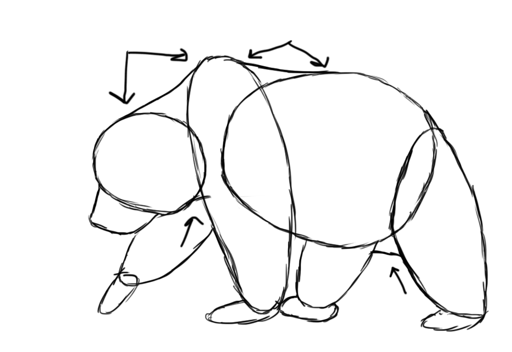 Drawn bear A How To  Draw