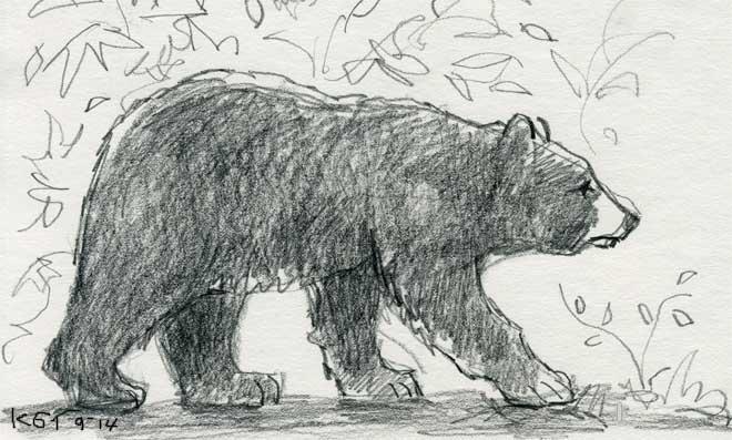 Drawn bear Realistic Photo Drawing Bear Bear