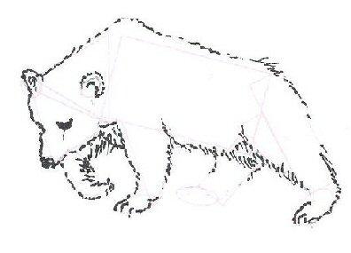 Drawn bear Draw Bear Bear To Draw