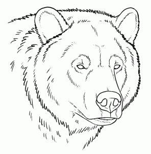 Drawn bear Wished knew Bear bears ideas