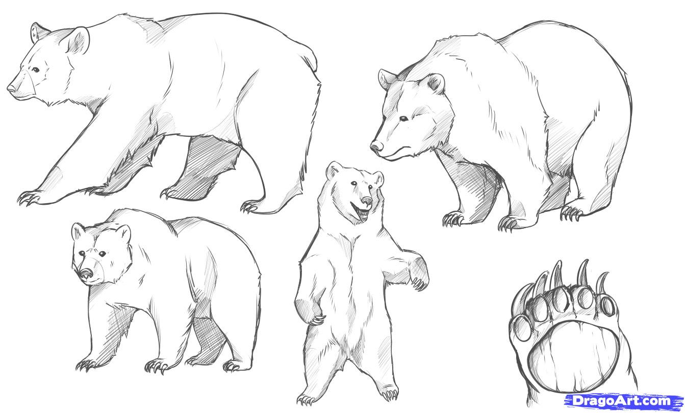 Drawn grizzly bear Bear Free Clipart on Standing