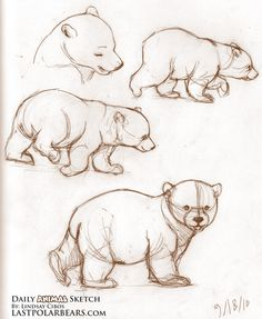 Drawn polar  bear tiny Bear ricerca lastpolarbears love http://www