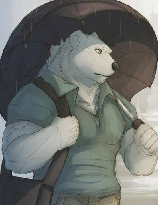Drawn polar  bear anthro Pictures Bear 73 images Furry