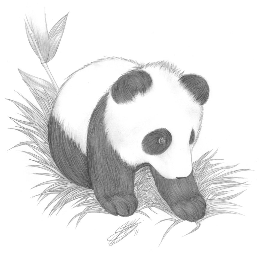 Drawn red panda really Picture Baby Cute Fun Baby
