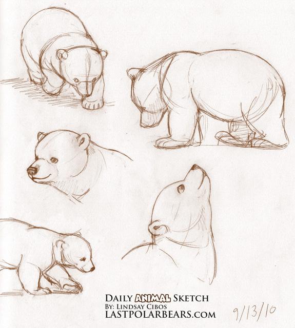 Drawn polar  bear disney Images Sketching about 17 to