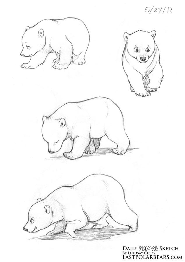 Drawn polar  bear bear cub – Daily of Polar Bear