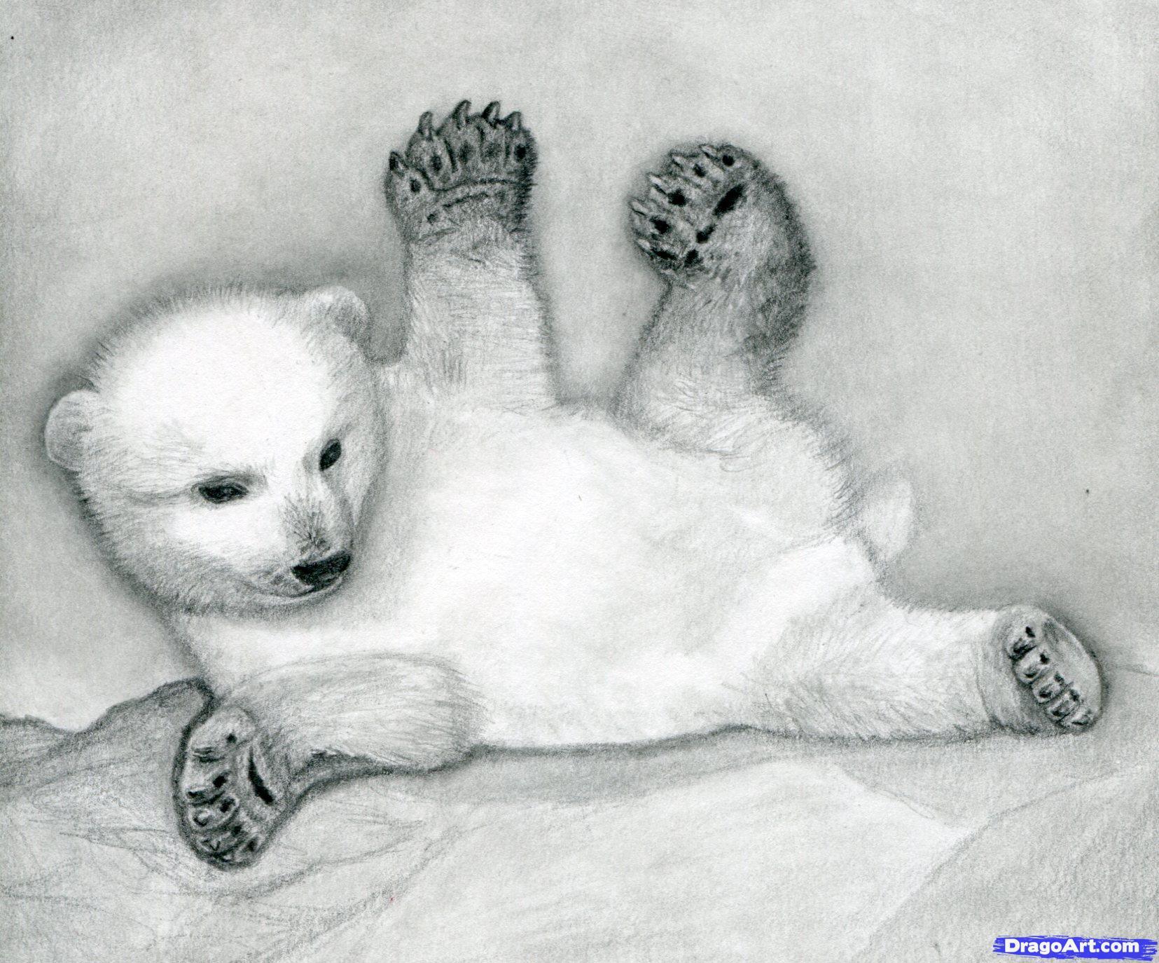 Drawn polar  bear bear cub Drawing bear Bear cubs Polar