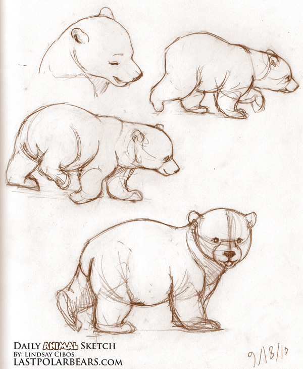 Drawn polar  bear bear cub Http://www della  this immagini