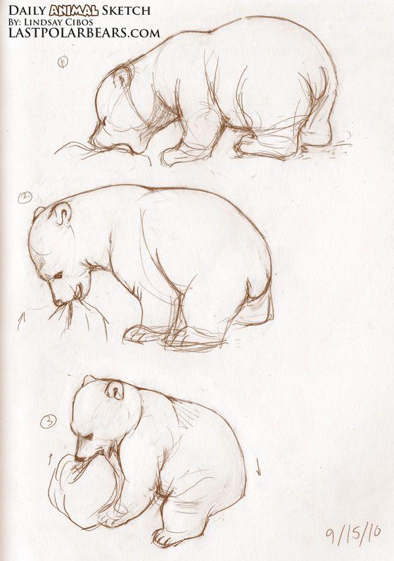 Drawn polar  bear disney On – Daily bears Bear