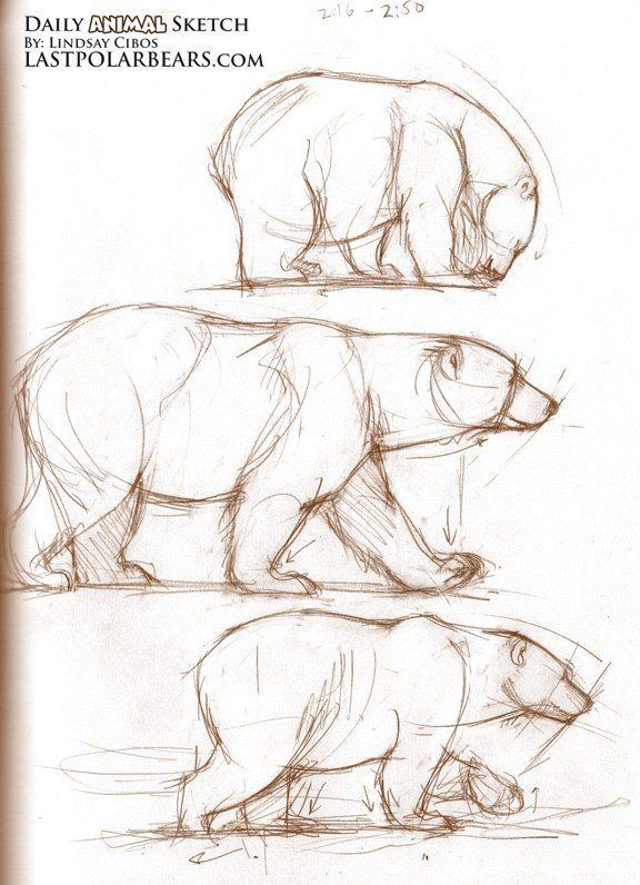 Drawn polar  bear small Drawings живопись Дзен of Best