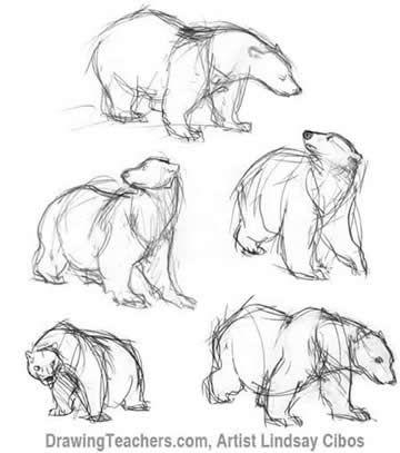 Drawn polar  bear sketch How a Drawings of bears