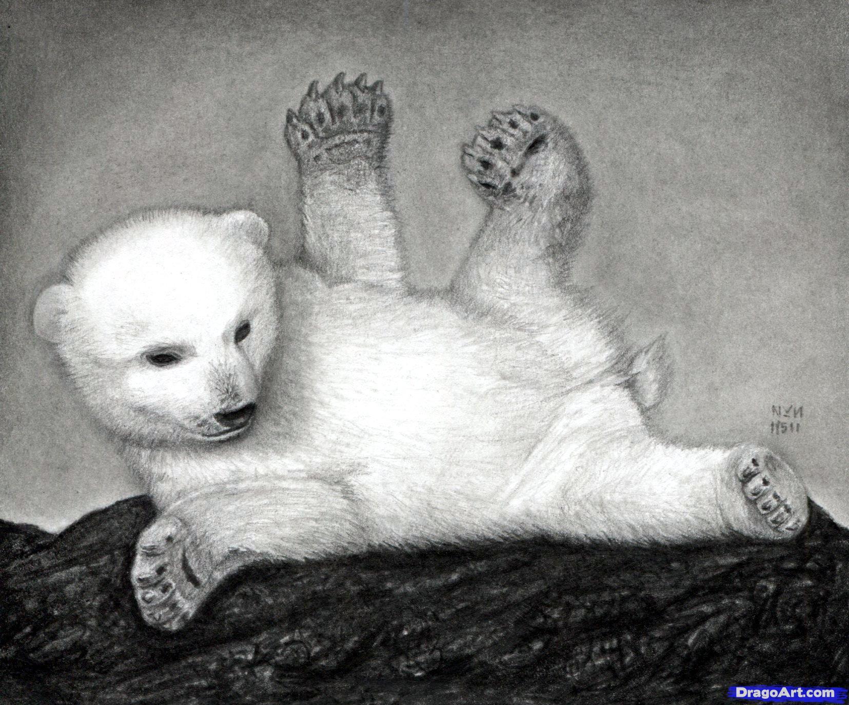 Drawn polar  bear dragoart A Draw Polar Bear Step
