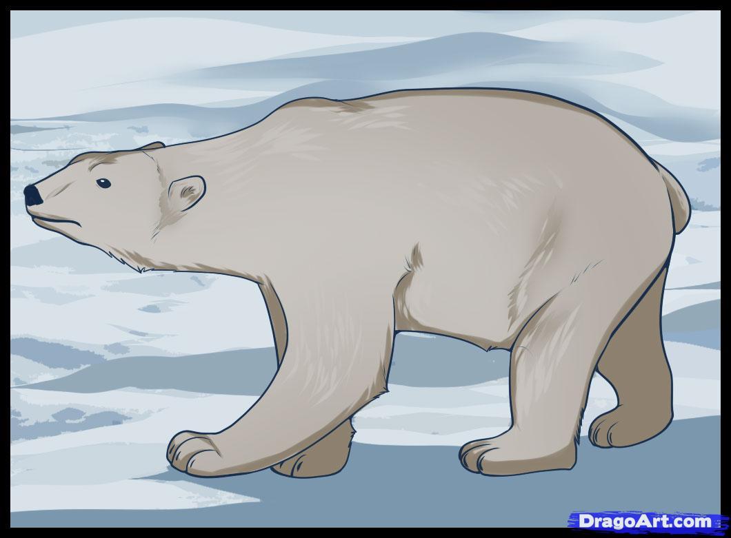 Drawn polar  bear pencil drawing How polar to draw Bear