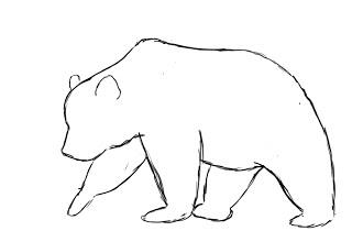 Drawn polar  bear face Bear  Draw Animals For