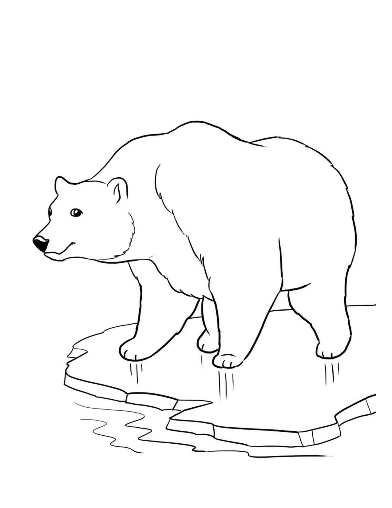 Drawn polar  bear coloring page For bears Animals Animals Coloring